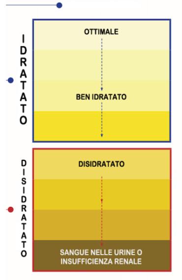 Idratazione-e-colore-urine.png