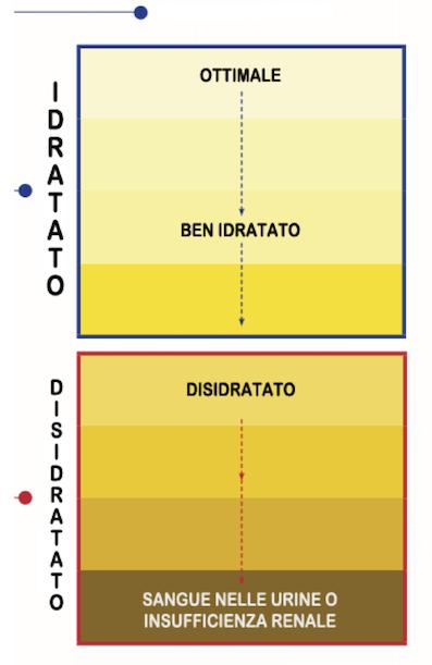 Idratazione-e-colore-urine