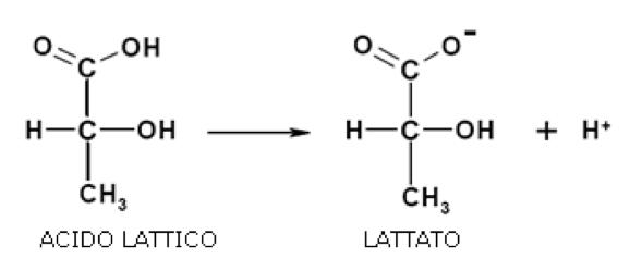 acido-lattico-lattato