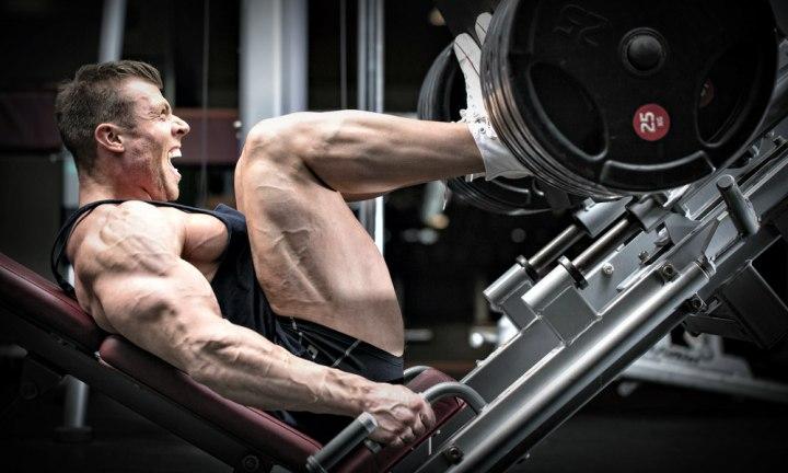 Tessuto muscolare: componenti, forma, contrazione edipertrofia