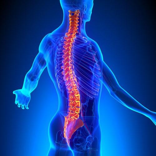 Colonna vertebrale: osteologia e patologieprincipali