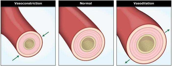 artery_function