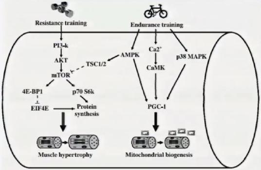 biogenesi