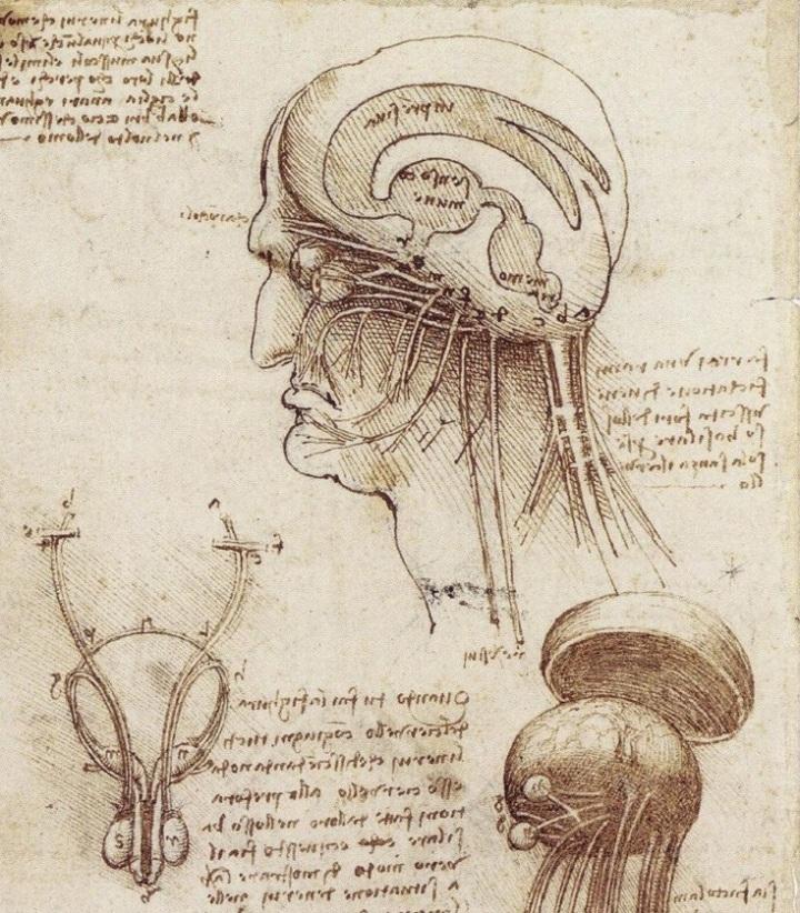 Cervello: istruzioni perl'uso