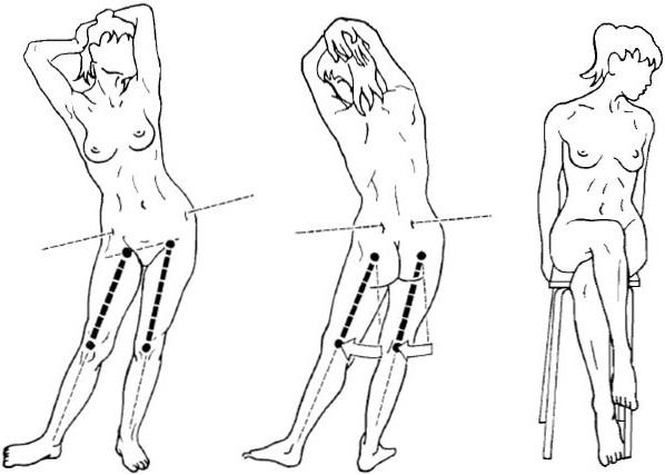 Anca: anatomia e biomeccanica dibase